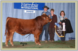 DVE Davidson Tequila 29N - Reserve Grand Champion at the 2003 Farmfair International in Edmonton.
