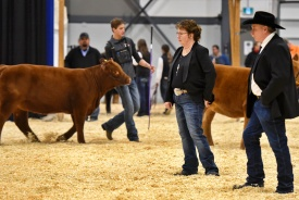 Vern and Eileen judging at 2019 Agribition.