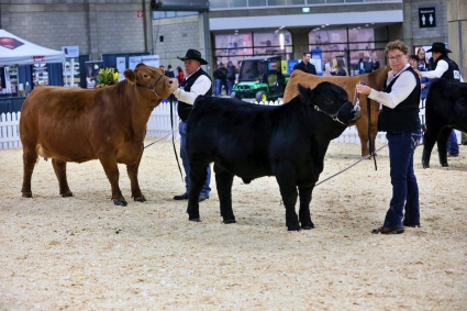Vern and Eileen in the show ring at Edmonton